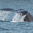 Humpback whale by jozi1