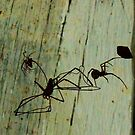 Spiders Oh Scary Spiders!! by Misty Lackey