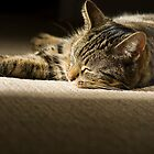 Bella - Cat Nap by Dimbledar
