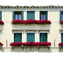 Window Boxes by Lynne Morris
