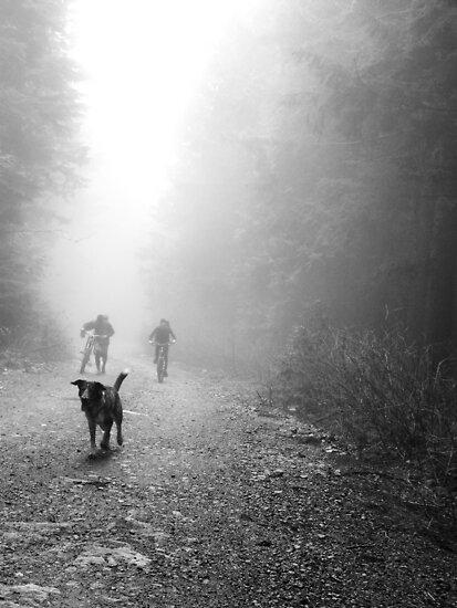 Fog Dog -Mt Fromme, winter '08 by car1edb