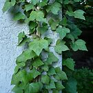 Hedera helix = ivy by bubblehex08