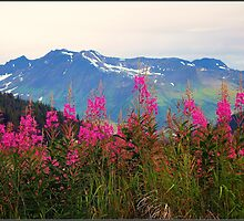 Fireweed Resurrection Valley Alaska by Terry Temple