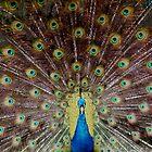 Cocky Bird by PhotosByTraci