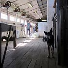 The Sheep Dog - Australian Working Kelpie by Kitsmumma