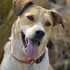 Smiling Dog by ElfinYeti