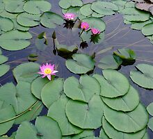 Water Lilies VII by Cheung King-man