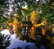 Velvia Forest by busidophoto