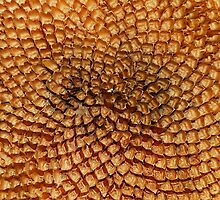 De-Seeded Sunflower Head  by jojobob