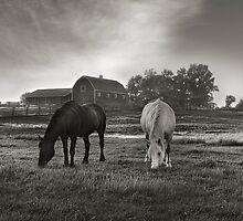 Evening Grazers by Steve Silverman