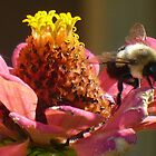 Bee on a flower by BillH