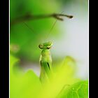 Praying Mantis w/border by KatsEyePhoto