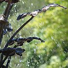 Water Spray by russiannut