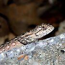 Baby Lizard by Sandra Moore