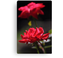Knockout rose flowers Canvas Print