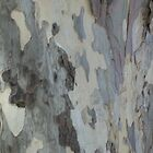 Plain Bark Provence 2 by Pontvert