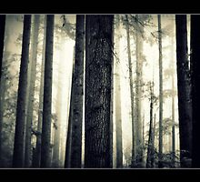 Lady in the forest by captureES