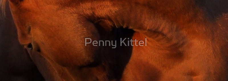 Russet shadows by Penny Kittel