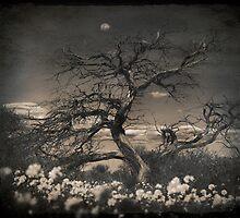 Paper Moon by Pene Stevens