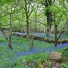 Bluebell Wood by Sally J Hunter