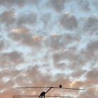 Morning Birds by LDP30