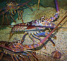 Colorful Lobsters by Paulette1021