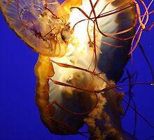 Sea Jelly by Paulette1021