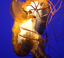 Jelly of the Sea by Paulette1021