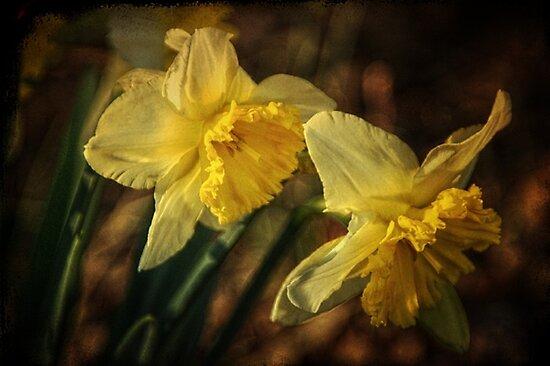 Daffodil Afternoon by Christine Annas
