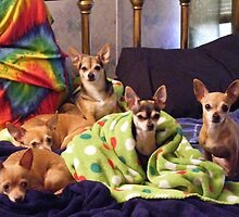 Resting Chihuahuas by Marie Smith