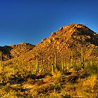 Saguaro National Park by Justin Baer