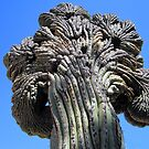 Crested Saguaro by DAdeSimone