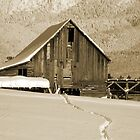 Old barn in Bigfork, Montana by Maria Elena  Black