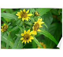 Swamp 'Sun Flowers' Poster