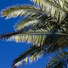 Palms by AmandaKopcic