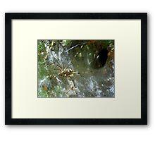 Funnel Web Spider ~2 Framed Print