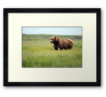 Walking With the Brown Bears in Hallo Bay Framed Print