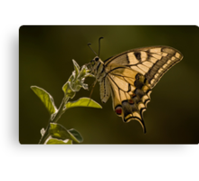 Tiger Swallowtail Butterfly Macro Canvas Print