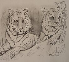 tigers on a rock by davidhtarrant