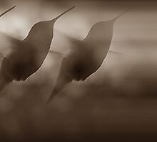 Silhouettes Of A Hummingbird (in Sepia) by Jonice