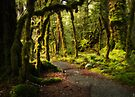 Enchanted Forest - Fiordland National Park by Dean Mullin