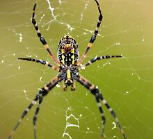 yikes a spider by jdadkin