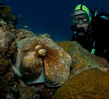 Diver with Octopus by Todd Krebs