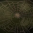 Spider art by Vikki Shedden Photography