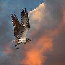 The Osprey Whistle by byronbackyard