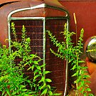 Abandoned Truck Grille, Liberty, Maine by fauselr