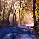 Deep Autumn Sun  by NatureGreeting Cards ©ccwri