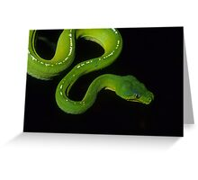 Green Python Greeting Card