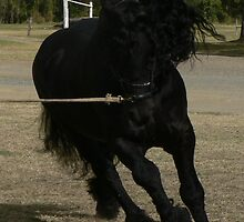 Friesian Power by louisegreen