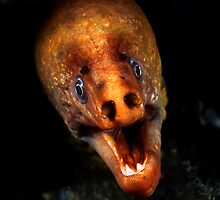 It's a Moray by Deb Aston
